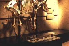 AnimalSkeleton